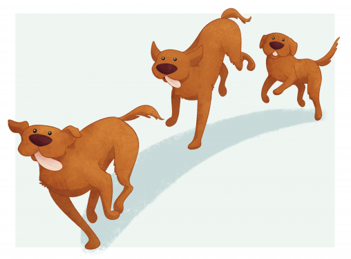 A three-image sequence of a dog running